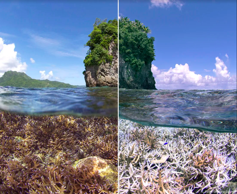 An example of bleached coral located in the American-Samoa taken with a 360 camera, XL Catlin Seaview.